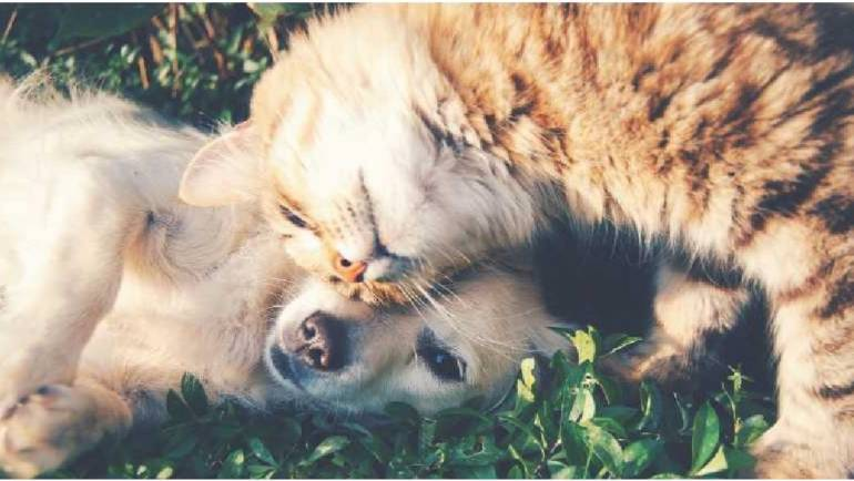 Donate Dog and Cat Food for Lakeview Food Pantry